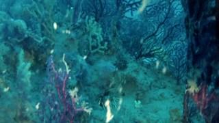 Mediterranean sea: underwater panorama breathtaking