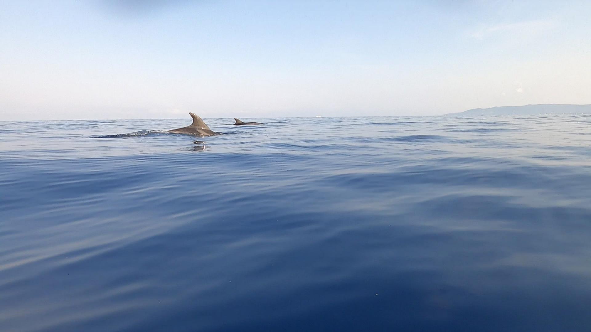 Santuario cetacei Delfini Tursiops truncatus intotheblue.it
