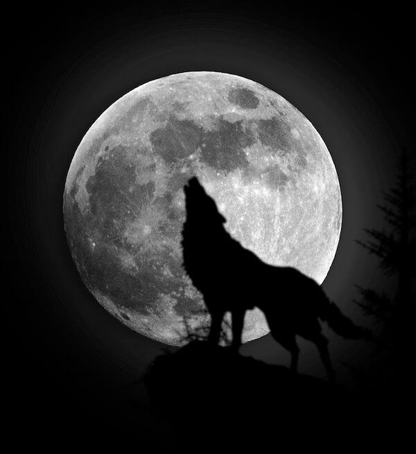 Wolfman Medicine