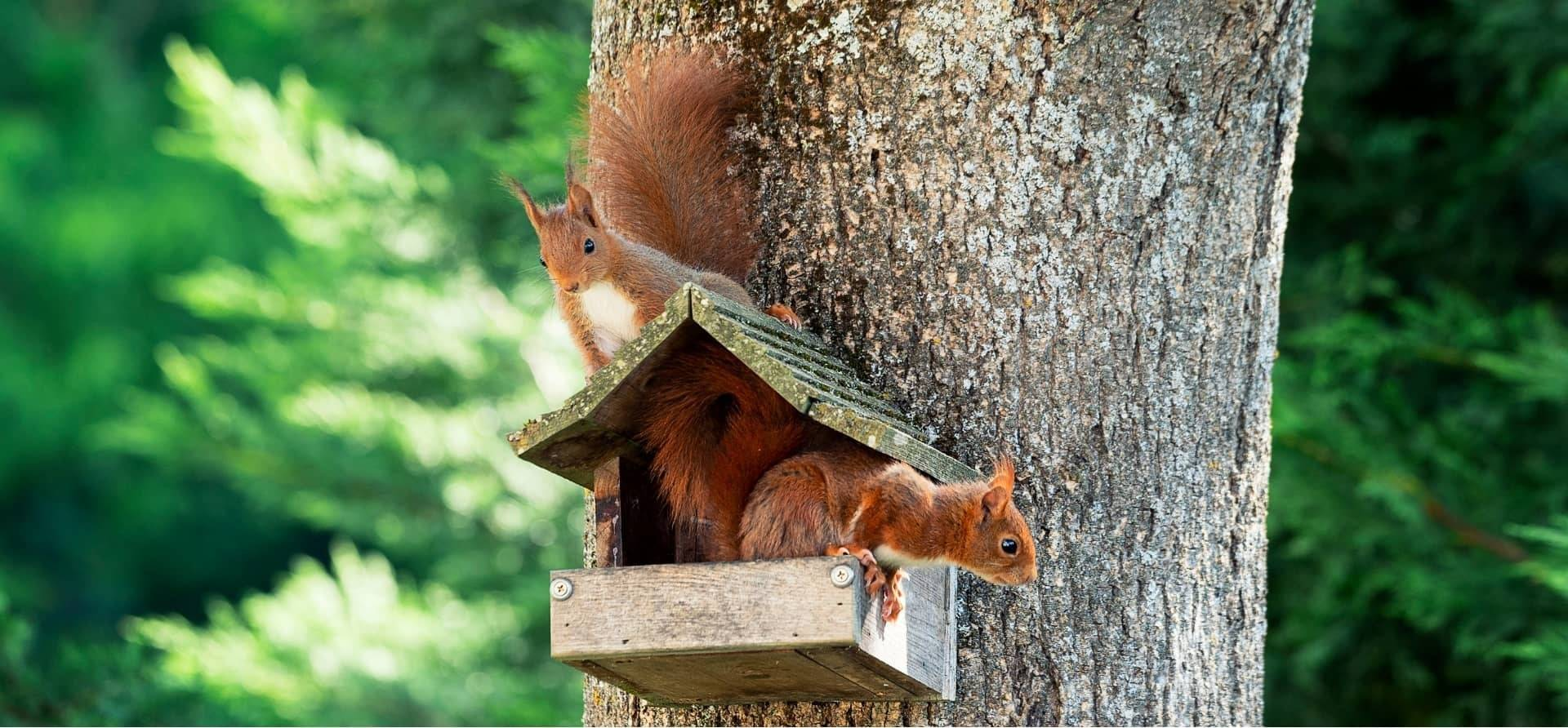 When Do Baby Squirrels Leave The Nest? [The Complete Process]