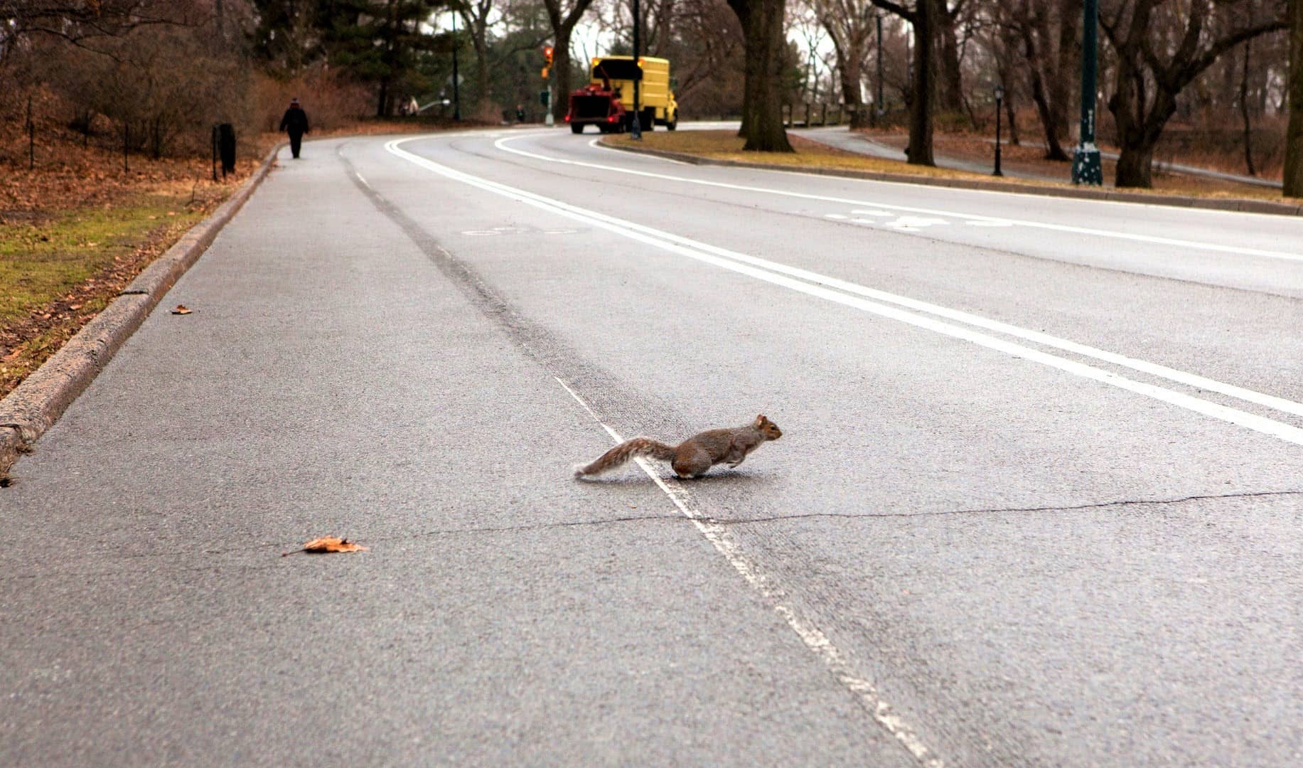 Why Do Squirrels Run In Front Of Cars & Stop In The Middle of The Road
