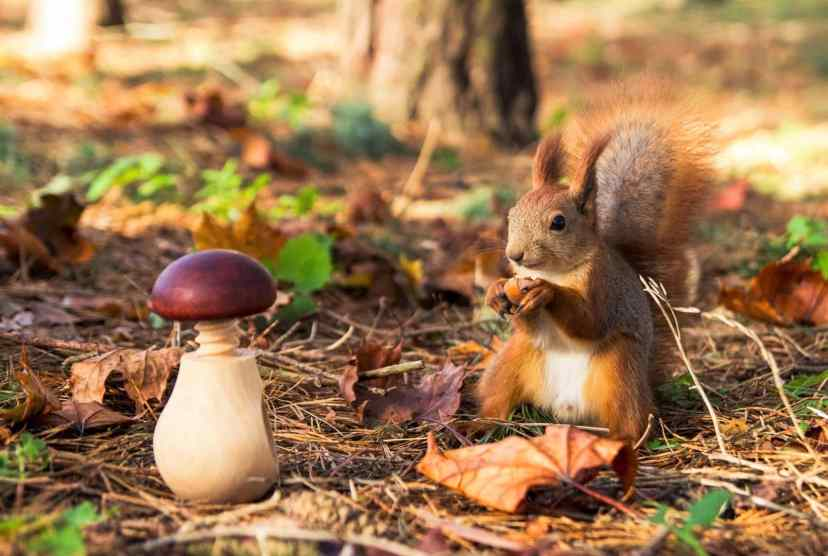 Do Squirrels Eat Mushrooms Is It Beneficial For Them [Here's Why...]