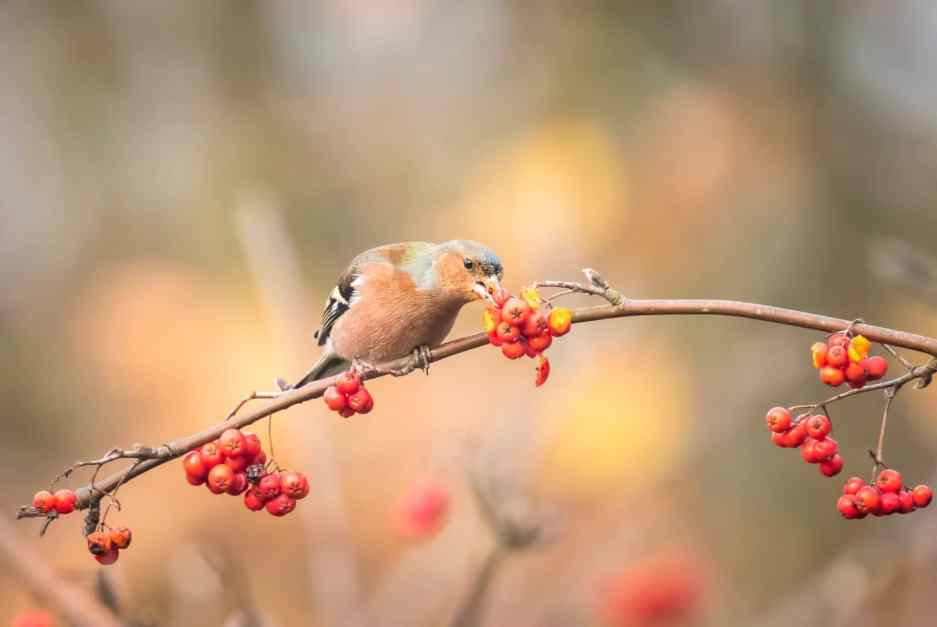 Do Birds Eat Cranberries? Which Berries Do They Eat? Here's...