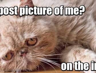 Interesting elsewhere: predictions, reactions and the case for LOLcats on your #intranet