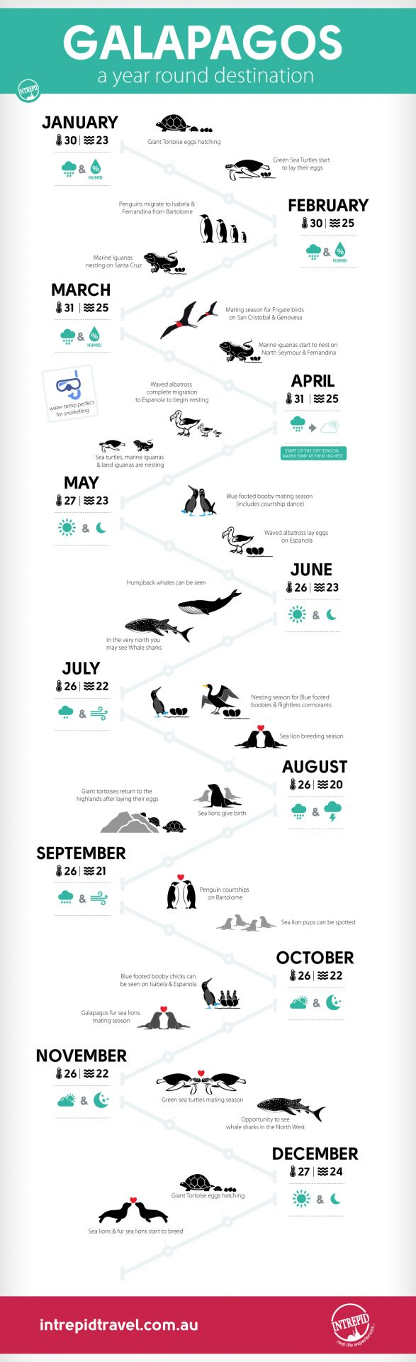 Best times to visit the Galapagos Islands infographic