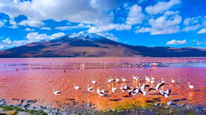 Image result for LAKE OF BLOOD bolivia