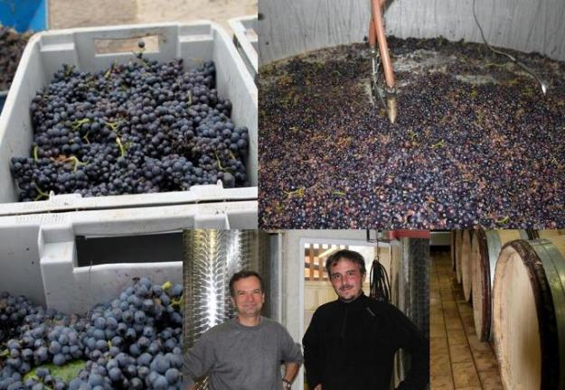 From the vineyard to the winery