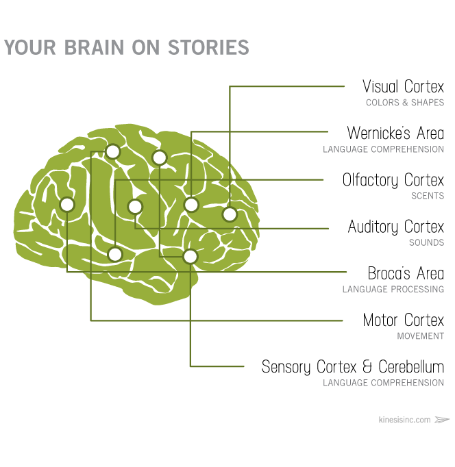 an image of the 7 areas of the brain activated by STORY