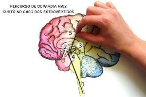 Percurso de Dopamina Mais Curto no Caso dos Extrovertidos