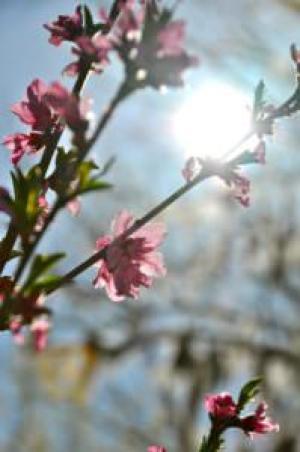 springgarden5