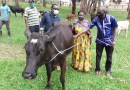 "Kamonyi-Rukoma: Abagabiwe Inka babwiwe ko kuyigurisha ari nko ""Kunyereza umutungo wa Leta"""