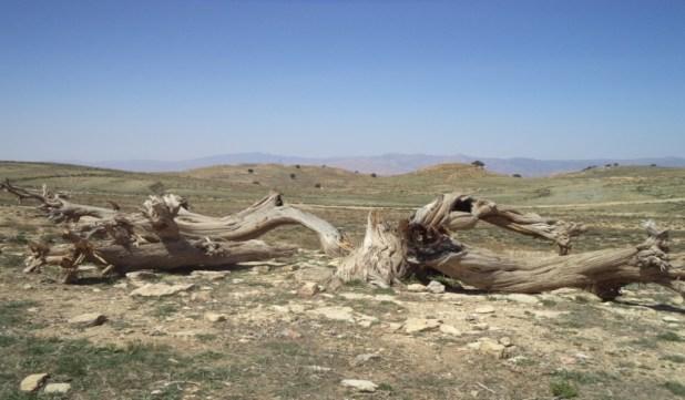 Photo 3.b : arbre brûlé (la région de Hkoukth).