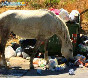Emergenza rifiuti in Sicilia: il Governo regionale lancia i cavalli-spazzini...