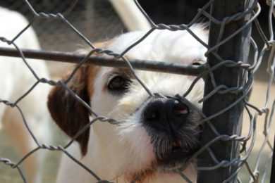 Scandalo del canile di Palermo 2/ Ore 4 di mattina: comincia la battaglia per difendere i cani