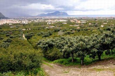Palermo e i mandarineti di Ciaculli: dopo il nuovo cimitero anche la sede dell'IKEA?