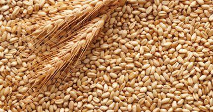Tavolo per la crisi agricola siciliana: il Governo Musumeci continua a ignorare il grano duro