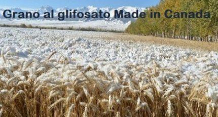 Come difendere, Statuto alla mano, l'agricoltura siciliana/ MATTINALE 102