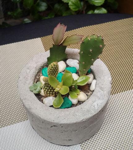 Mini Jardin Cemento - Plantas Reales - Foto superior