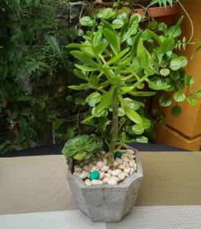 Mini Jardin Cemento - Plantas Reales - Modelo Octa - Foto frontal
