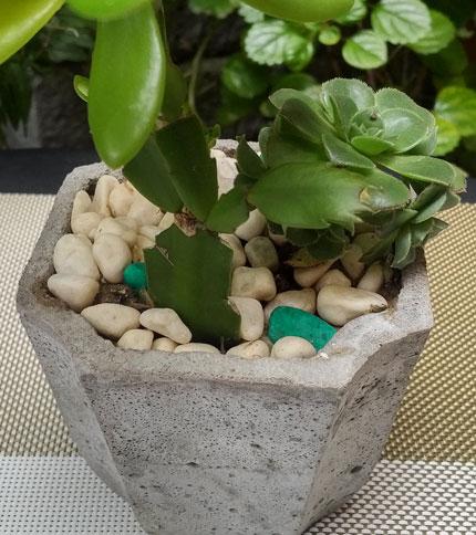 Mini Jardin Cemento - Plantas Reales - Modelo Octa - Foto frontal acercada
