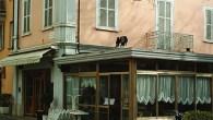 Piazza G.Verdi 43043 Borgotaro (PR) Tel. 0525 96478 Fax 0525 96478 E-mail: info@albergo-firenze.it Web www.albergo-firenze.it […]