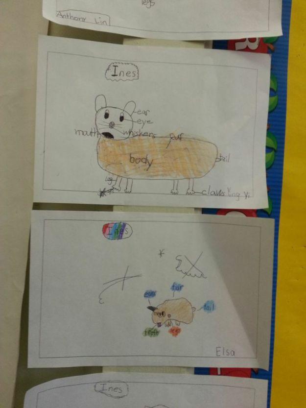 *hamster drawings