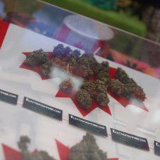 World Cannabis Congress