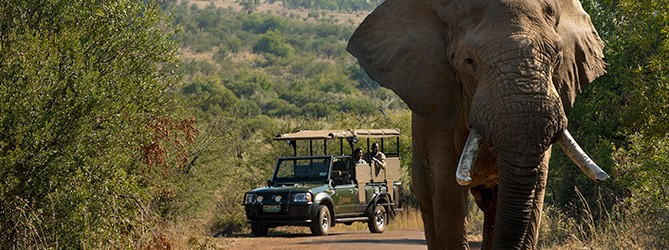 viaggio fai da te in sudafrica safari