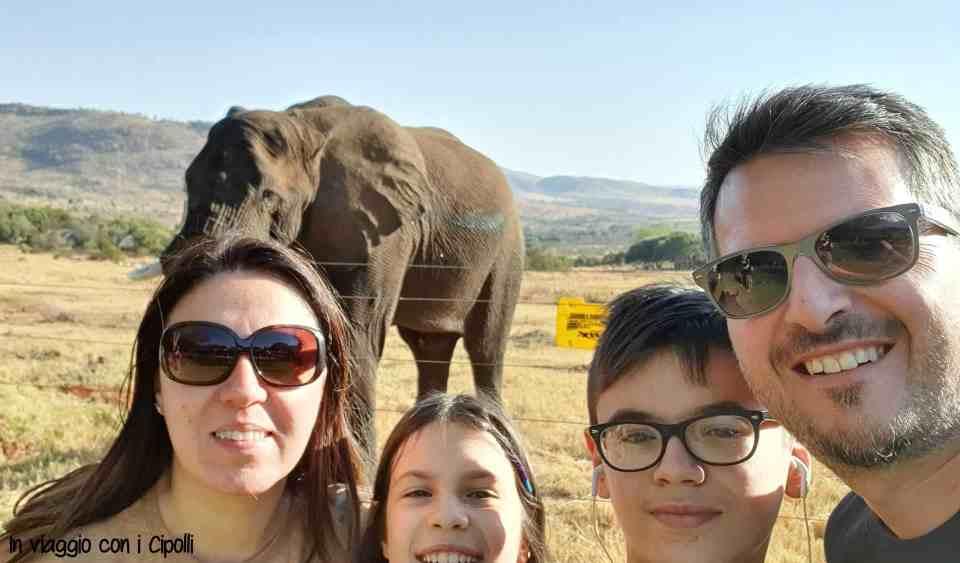 Elefanti Sudafrica