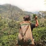 Fabbrica del té in Sri Lanka, quello che ho imparato