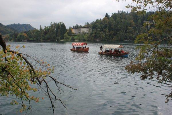 Le pletne si avvicinano all'isoletta sul lago (Bled, Slovenia)