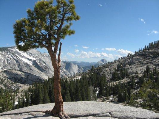 Tour dei Parchi, la valle di Yosemite vista da Olmsted point sulla Tioga Road (Stati Uniti)