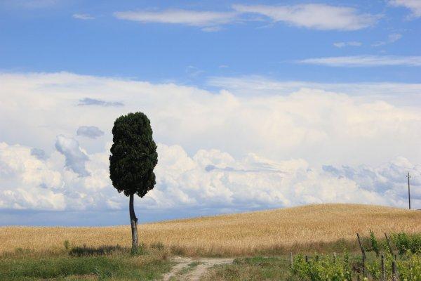 Viaggio in Toscana, paesaggio caratteristico in Val d'Orcia (Italia)