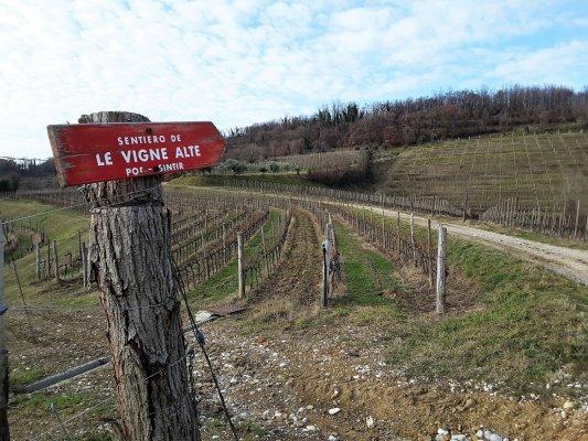 Viaggio in Friuli Venezia Giulia, il sentiero delle Vigne Alte (Italia)