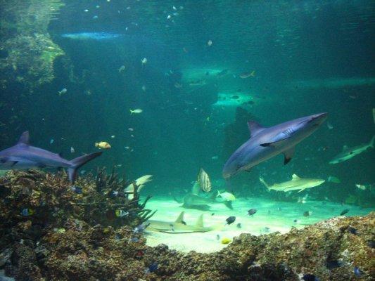 Interno dell'acquario di Sydney