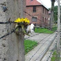 Viaggio della Memoria ad Auschwitz, guida alla visita fai da te