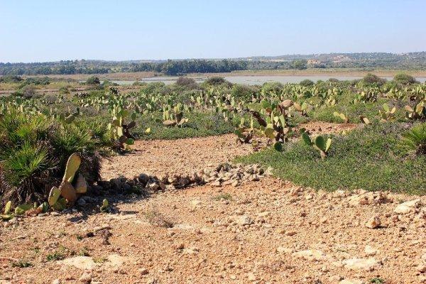 Distesa di cactus nella Riserva di Vendicari