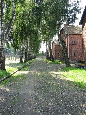 Auschwitz blocchi