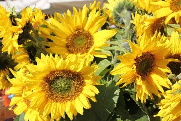 Mercato fiori Lubiana