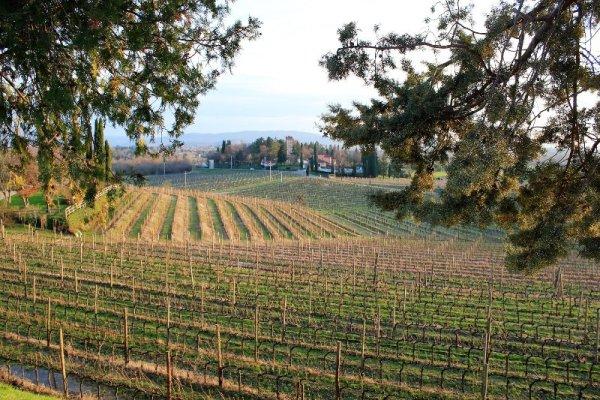 Vigne Castello di Spessa