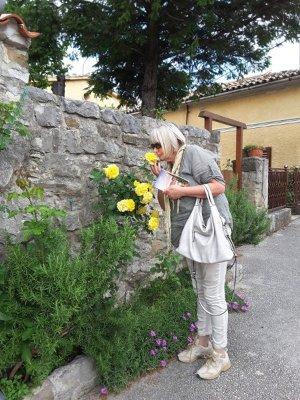 Rose per i vicoli di Roč (Rozzo) in Istria Croazia