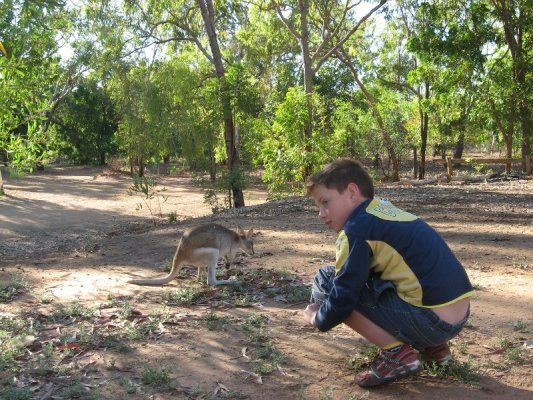 Wallaby Elsey National Park Australia