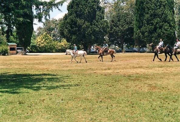 Cavallo Gauchos argentini