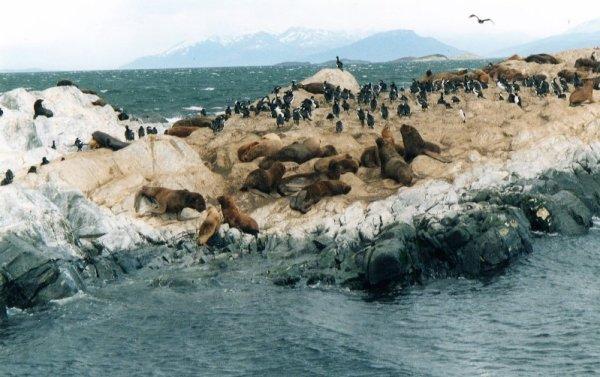 Isla de Los Lobos Canale Beagle Terra del Fuoco