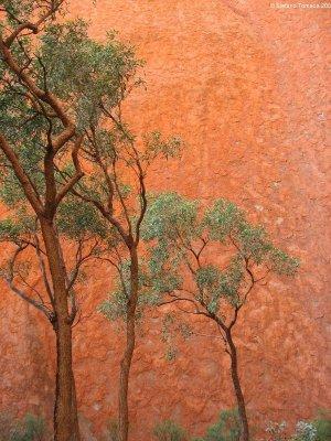 Mala Walk Uluru Australia