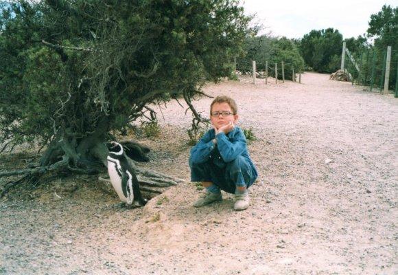 Pinguino di Magellano nella riserva di Punta Tombo in Patagonia
