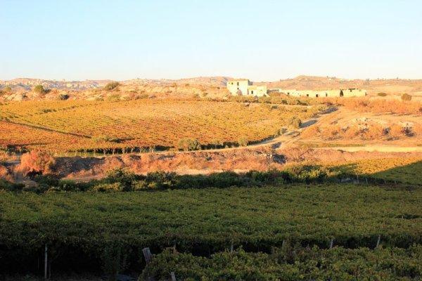 Panorama dintorni Agriturismo La Casa di Bacco