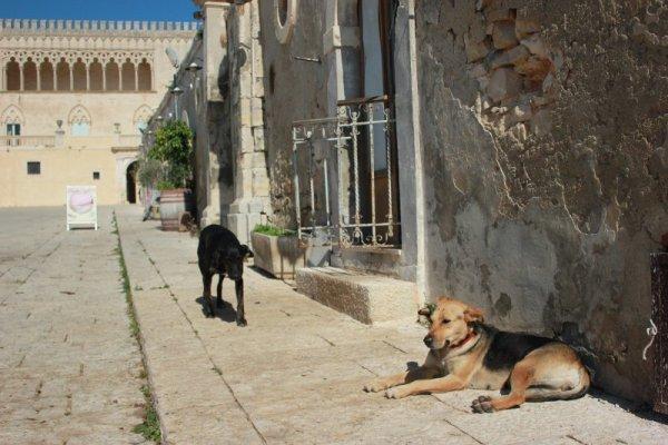 Strada di accesso al Castello di Donnafugata