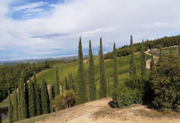 Panorama dei vigneti dell'azienda agricola Isole e Olena nel Chianti