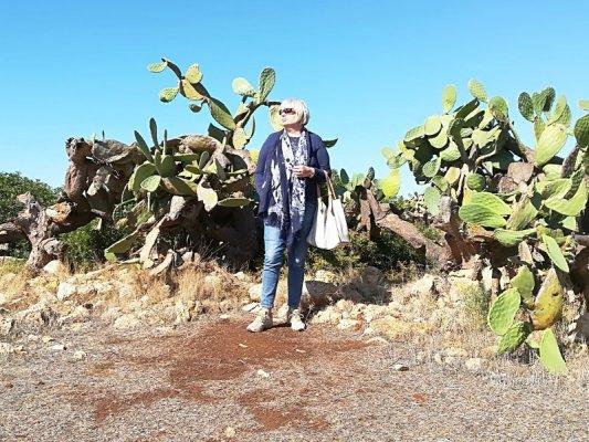 Piante di cactus nel Parco di Porto Selvaggio nel Salento